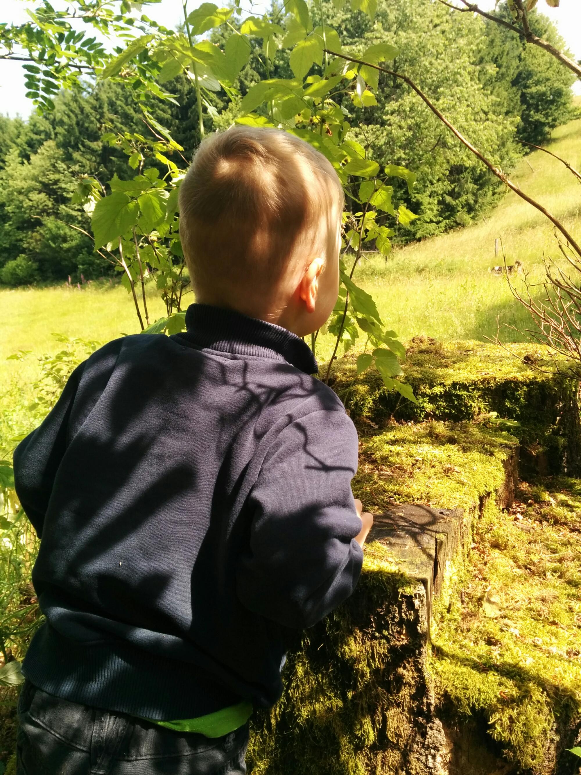Minimann schaut ins Grüne